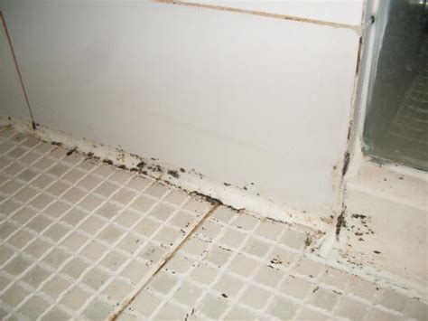 mold spots on bathroom walls bathroom mildew picture of days inn forbidden city