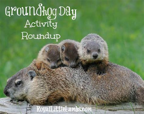 groundhog day ringtone groundhog day ringtone 28 images primus cd covers