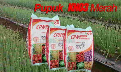 Pupuk Yang Cocok Untuk Tanah Merah fungsi dan kandungan hara pupuk kno3 merah