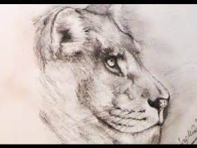 How to draw a lion using pencil youtube