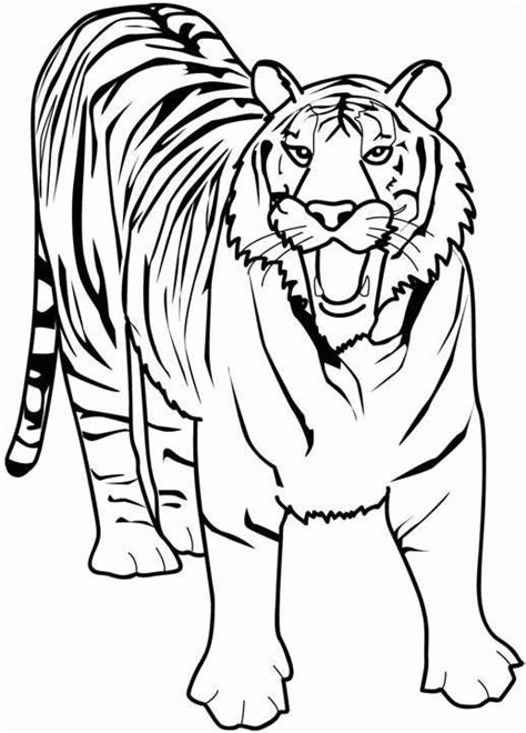 advanced tiger coloring pages tiger 2 coloring page