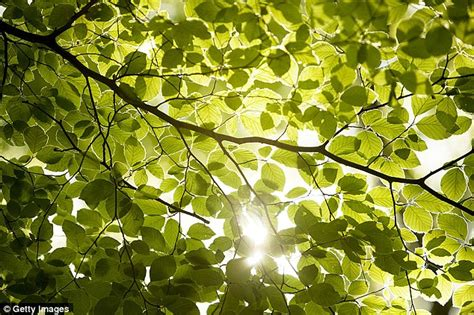 artificial sunlight l for plants illinois university scientists say innovative system may