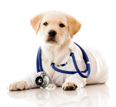 the happy veterinarian a guide for finding happiness in veterinary medicine in challenging times books welcome veterinarian pet vet clinic in marietta ga
