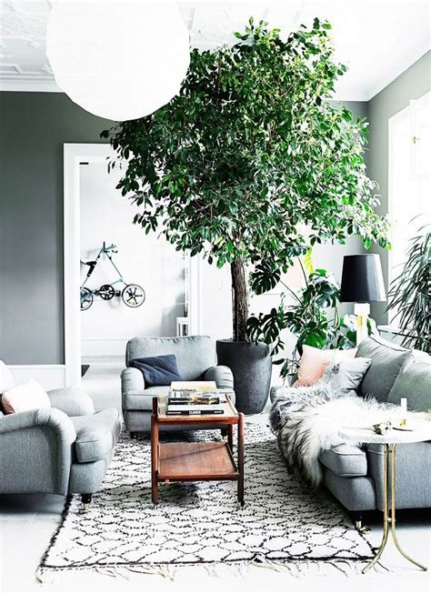 25 best ideas about indoor trees on indoor