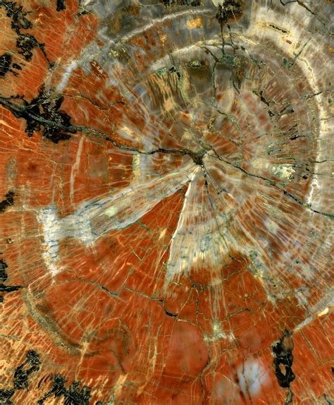 petrified wood what is petrified wood how does it form