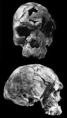 Where did homo sapiens emerge from? - Quora