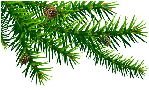 green pine branch png clip art image gallery yopriceville high quality images