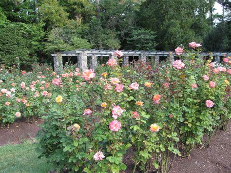 Garden Raleigh Nc by Raleigh Garden Nicholsnotes
