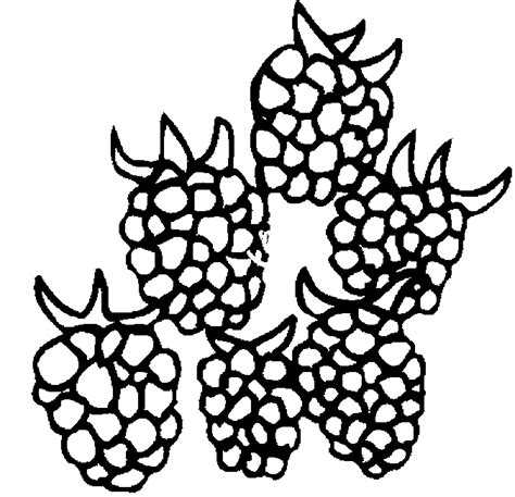printable raspberry coloring pages