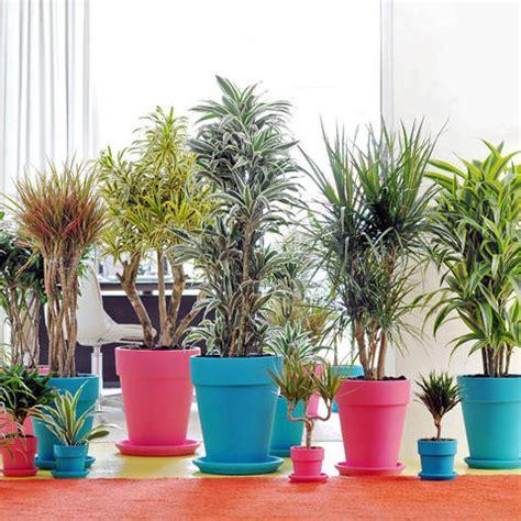 zimmerpflanzen schlafzimmer great pflanzen im schlafzimmer ungesund images gallery