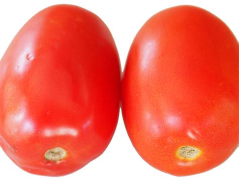 what s the best way to store tomatoes serious eats