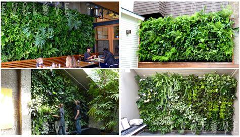 Vertical Garden Irrigation System Drip Irrigation System For Vertical Garden