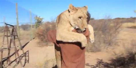 film lion mangeur d homme quand un lion se jette sur un homme pour lui faire un