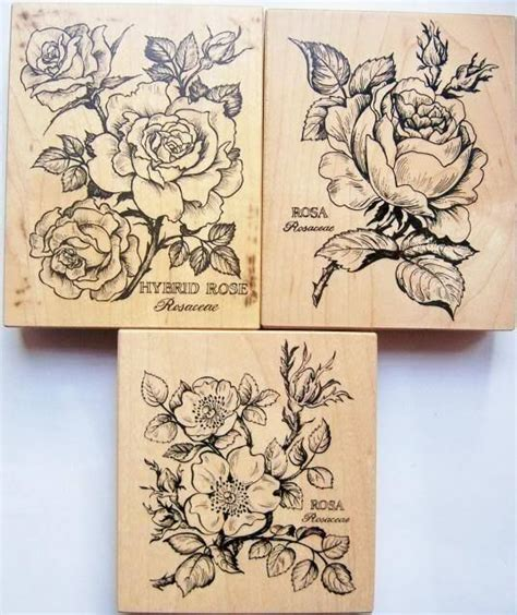 psx botanical rose cabbage hybrid wild rosa rubber stamp k