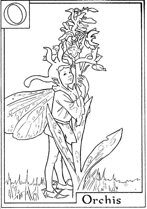 fairies in bloom a flower coloring book books and print letter o for orchis flower