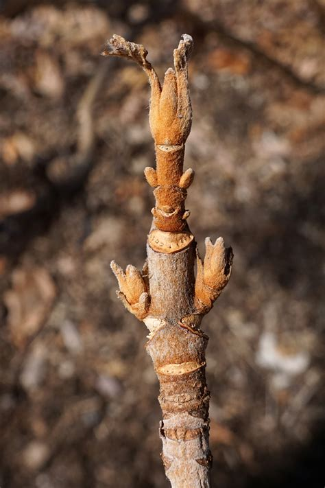 wann säulenobst schneiden hortensien schneiden wann und wie zur 252 ckschneiden plantura