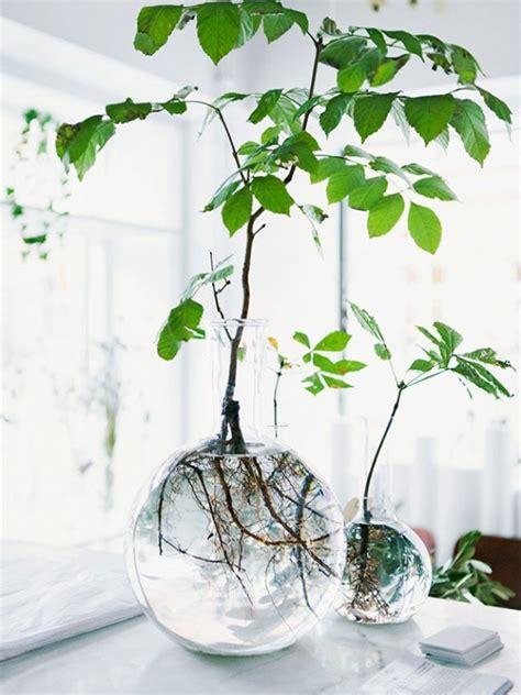 rooting plants  water  glass  joy  plants