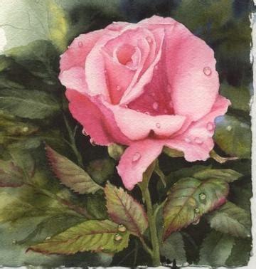 raindrops on roses transparent watercolor 169 2007 susie studio llc wonderful
