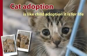 Cat Adoption Aspca Cat Adoption Animal Fund Of America