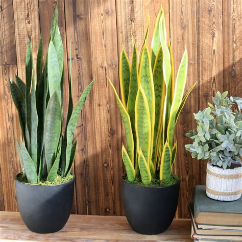 artificial succulent agave monolithic tropical leaves
