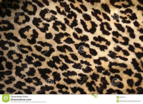 leopard designs leopard print royalty free stock photo image 590715