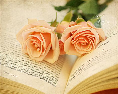 still photography roses and book photograph open