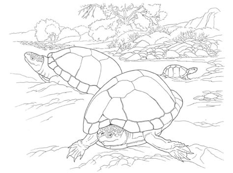 coloring page turtles printable free coloring pages of turtle