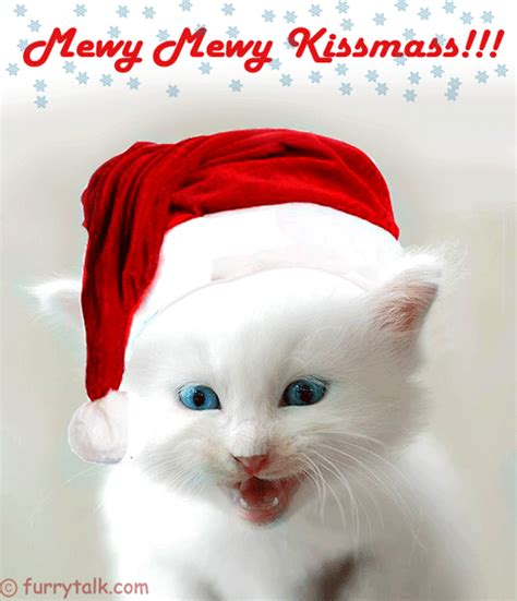 Images Of Merry Christmas Kittens | merry merry christmas kitten furry talk