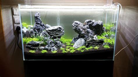 aquascaping forum ada 60l becken algen nach der ersten woche algen im