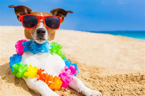 puppies wilmington nc the most things to do with pets in wilmington nc few moving company in