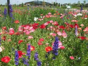 flowers in garden panoramio photo of wild flower garden