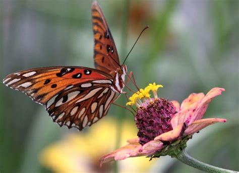 du relais du vert boiscomment attirer les papillons
