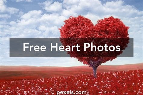 images of love latest heart pictures 183 pexels 183 free stock photos