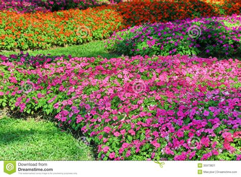 garden flowers a z periwinkle flower stock image image 35973821
