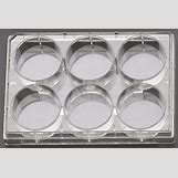 Cell Culture Plate | 800 x 535 jpeg 76kB