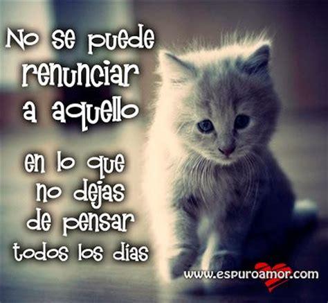 imagenes que digan te quiero al infinito y mas alla cartel con frase de amor para facebook de un gatito que no