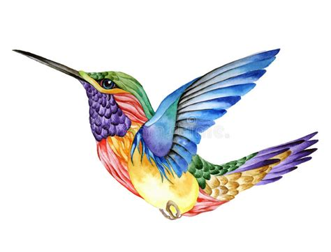 hummingbird tattoo watercolor painting stock vector