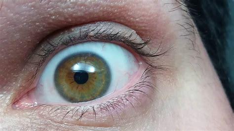 color avellana ojo cambia de color llamado camale 243 n tambi 233 n conocido
