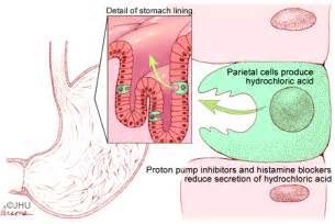 Gastric Proton Ppis Proton Inhibitors Causes Symptoms Treatment