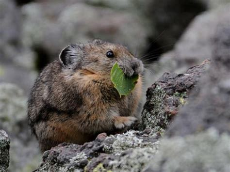 what do rats eat in the wild facts about rats diet