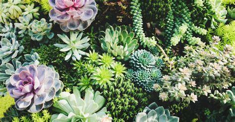 types  succulent plants   terrarium indoor