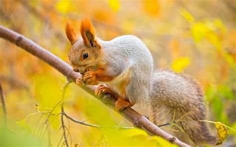 squirrel eating food on tree wallpapers 1680x1050 482259