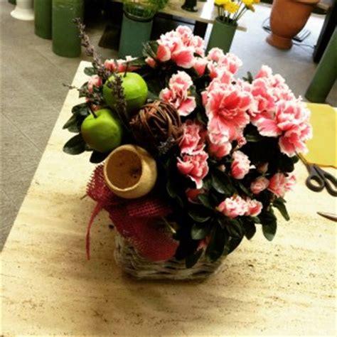 come curare le azalee in vaso come curare l azalea in vaso idee fiorite