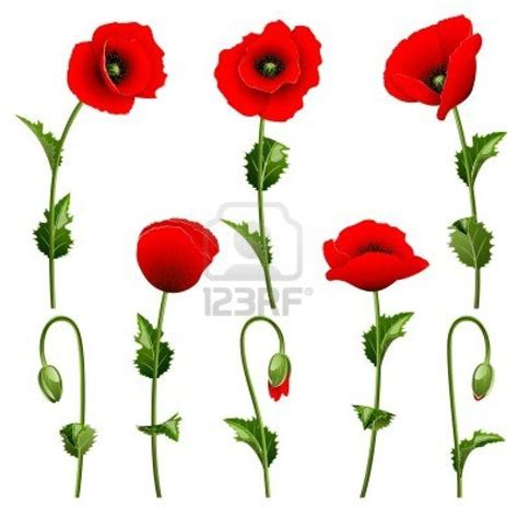 Google Images Poppies | poppies google search art life pinterest
