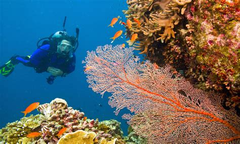 best dive spots in the world trazee travel best scuba diving spots in the world