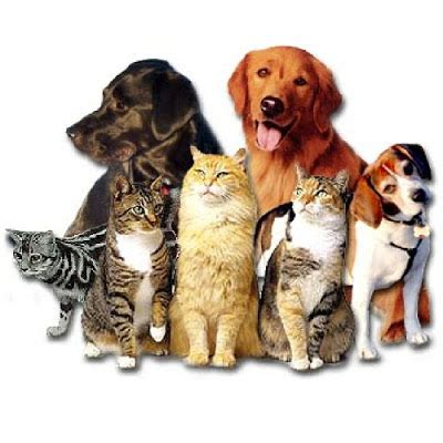 best shopping site best shopping for pets