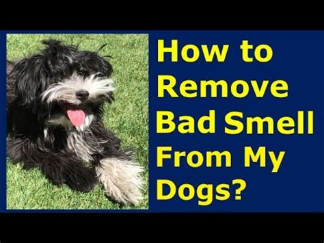 how to get a bad smell out of your room how to remove bad smell from my healthy clean pet