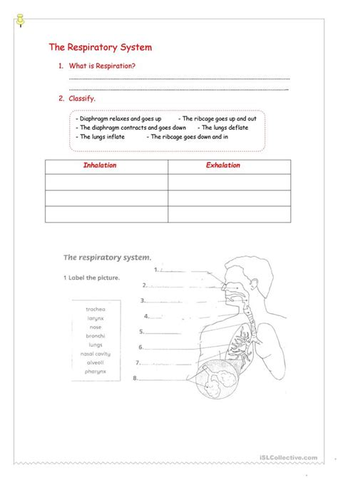 Respiratory System Printable Worksheets by Respiratory System Worksheet Free Esl Printable