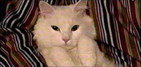 cbbc newsround animals meet joshua  allergy  cat