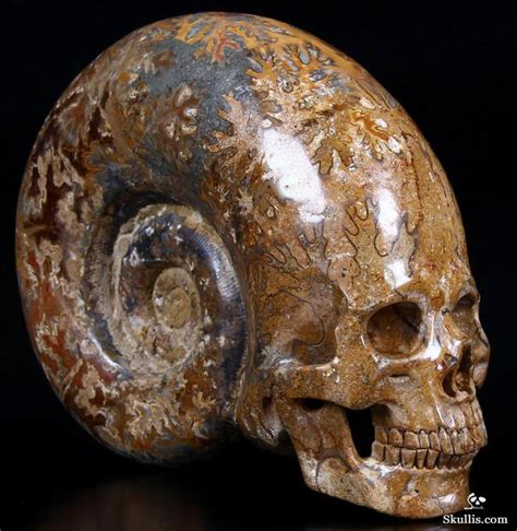giant 7 3 quot ammonite fossil carved crystal skull super